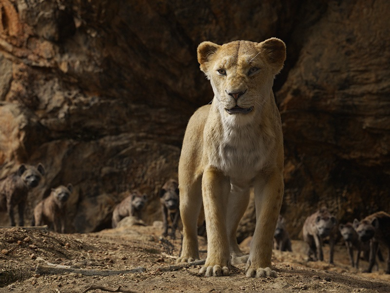 EventGalleryImage_TheLionKing_800j.jpg