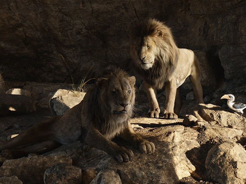 EventGalleryImage_TheLionKing_800k.jpg